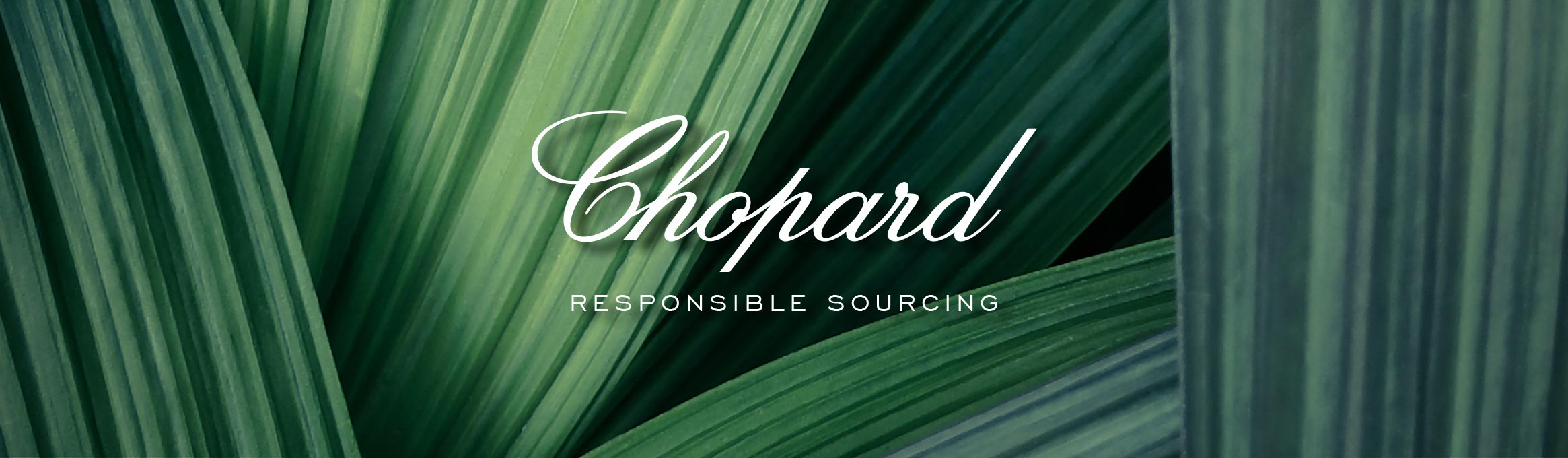 Chopard logo with responsible sourcing in bold letter, on a green leafy background