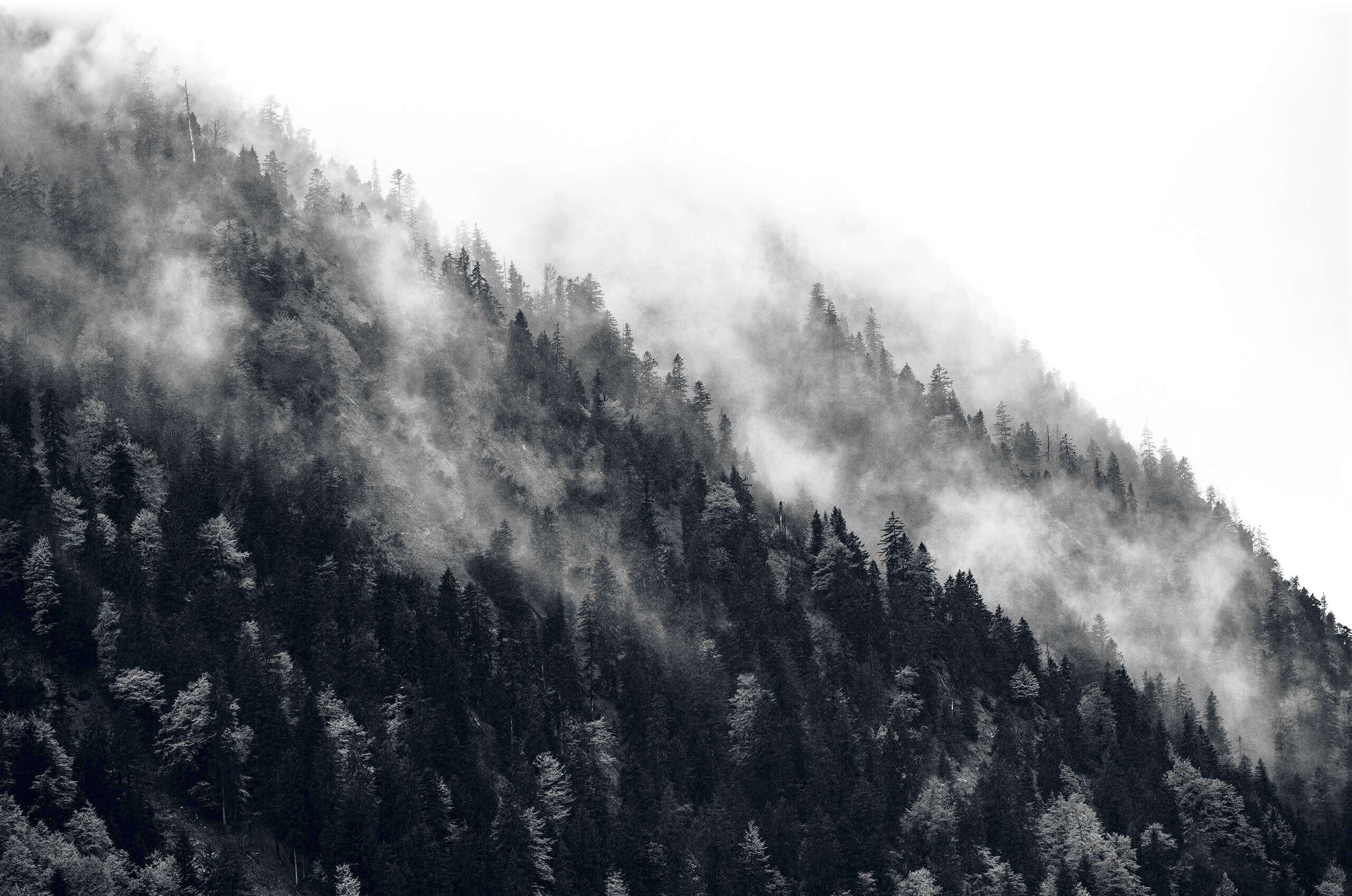 Steep moutainside with fir-trees and mist.