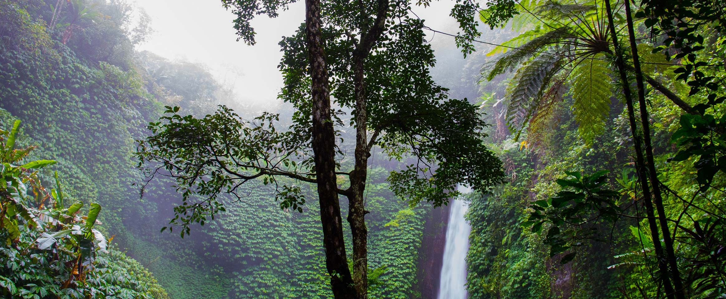 A tree in a clearing in the jungle, with a waterfall behind it and a grey, foggy sky.