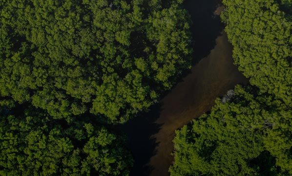 Aerial view of a deep green forest with huge trees.