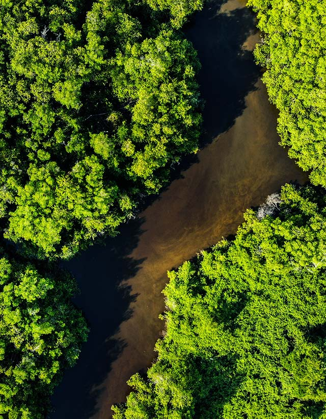 Aerial view of a dense forest composed of big green trees