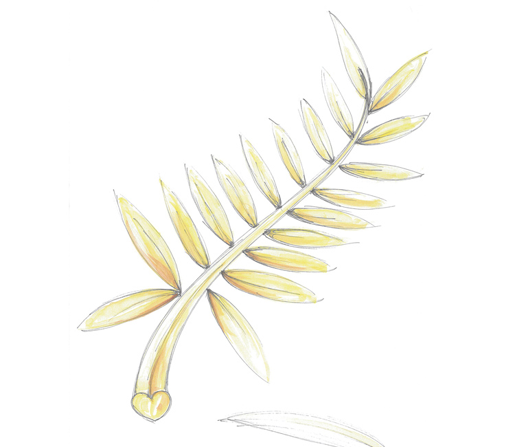 Sketch of the palme d'or